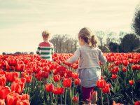 Observar la Primavera